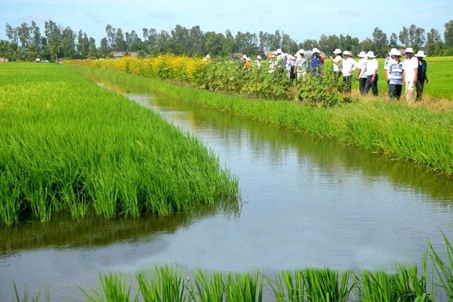 """Phát triển sản xuất lúa sạch - tôm sạch từ mô hình """"con tôm ôm cây lúa"""""""