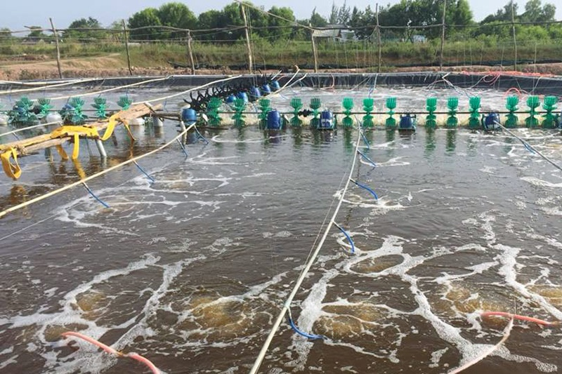 Thành tựu nuôi trồng thủy sản Nghệ An 2018