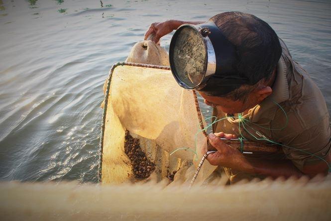 Hà Tĩnh: Ốc hương chết do quản lý môi trường nuôi và thời tiết