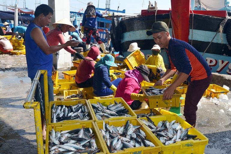 Ngư dân Đông Hòa được mùa cá nục, cá ồ