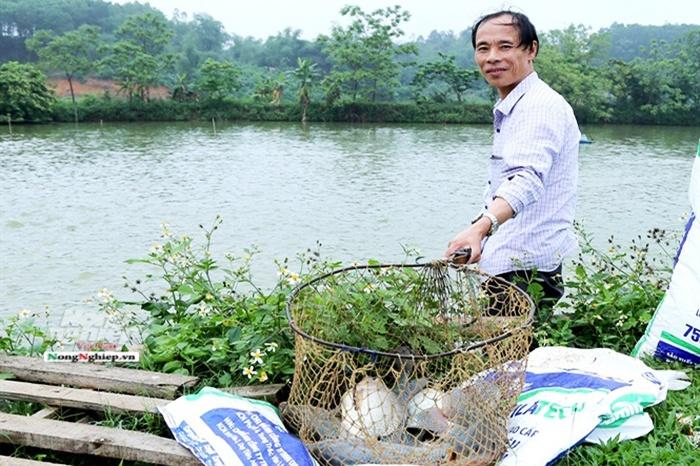 Mẹo ủ phân lợn làm thức ăn cho cá