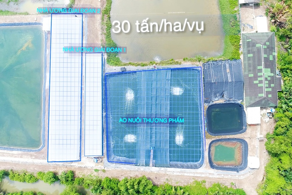 Shrimp Farming - Cover