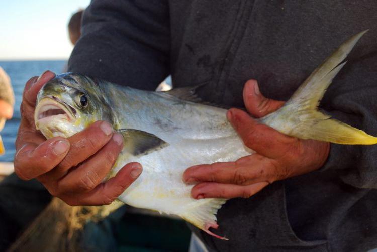 Bổ sung chromium có thể thúc đẩy tăng trưởng và giảm chi phí nuôi cá
