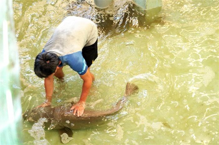 Đột phá nhân tạo giống cá song vua