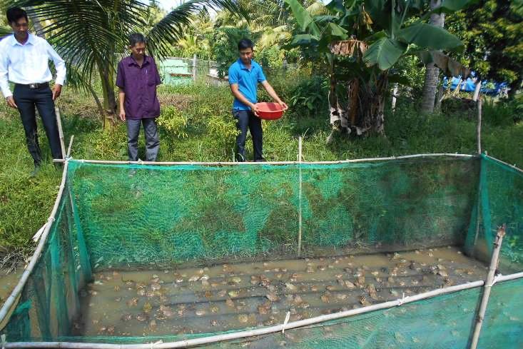 Trà Vinh: Khấm khá nhờ nuôi ếch sinh sản