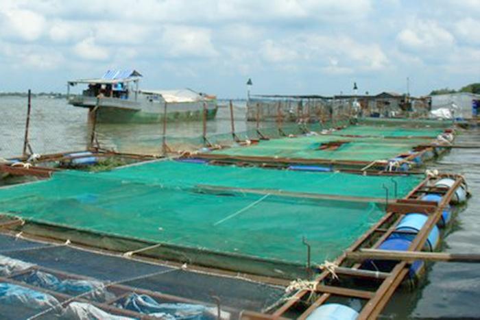 Giá cá tra, điêu hồng ở mức thấp