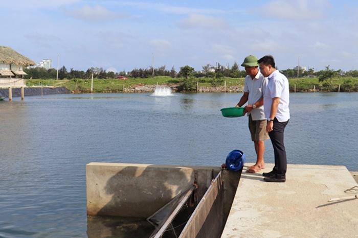 Công nghệ nuôi cá mú hiệu quả ở Sầm Sơn