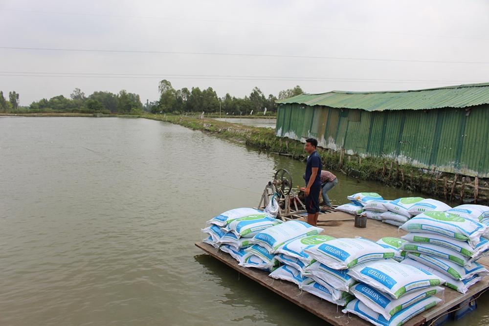 Việt Nam bắt tay với chuyên gia Anh để nghiên cứu bệnh trên cá tra
