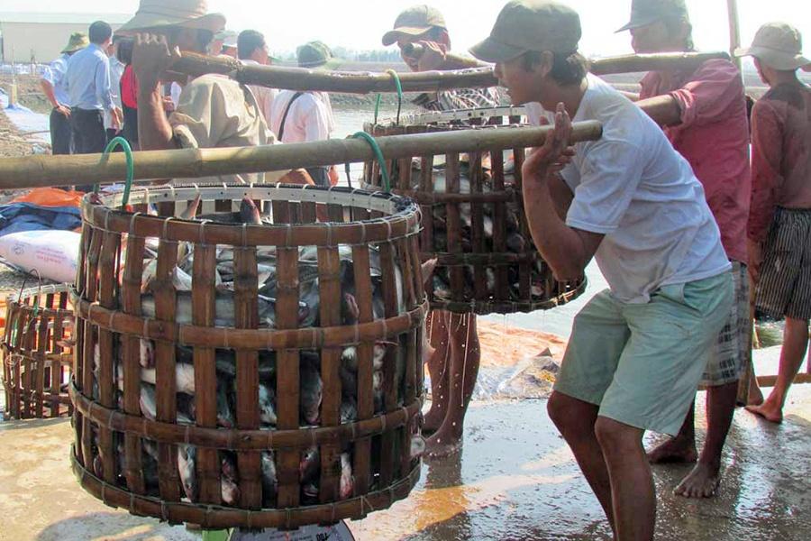 Phát triển thủy sản ở tiểu vùng Đồng Tháp Mười còn khó khăn
