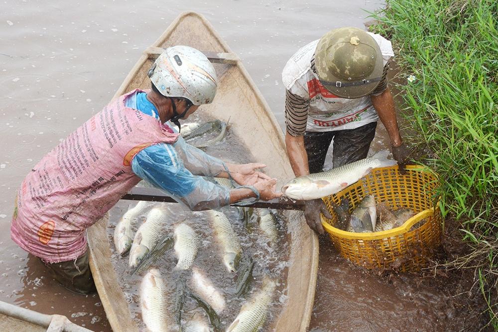 Đoan Hùng nâng cao chất lượng nuôi thủy sản