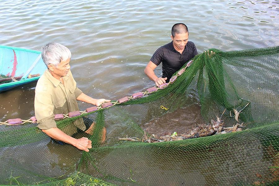 Phú Thọ: Nâng cao năng suất, giá trị ngành thủy sản