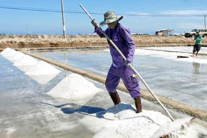 Bình Thuận: Diện tích muối toàn tỉnh giảm trên 357 ha