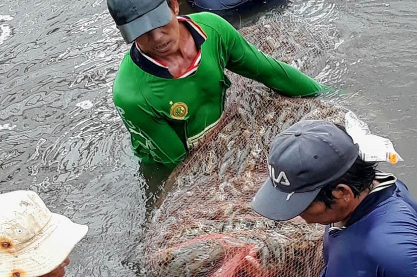 Bạc Liêu: Hướng đến trở thành trung tâm công nghiệp ngành tôm của cả nước