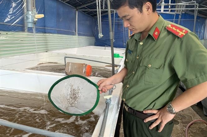 9 cơ sở sản xuất tôm giống sai phạm tại Cần Thơ