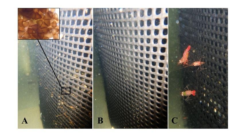 Một lựa chọn mới để điều trị bệnh do ký sinh trùng trong trang trại nuôi cá