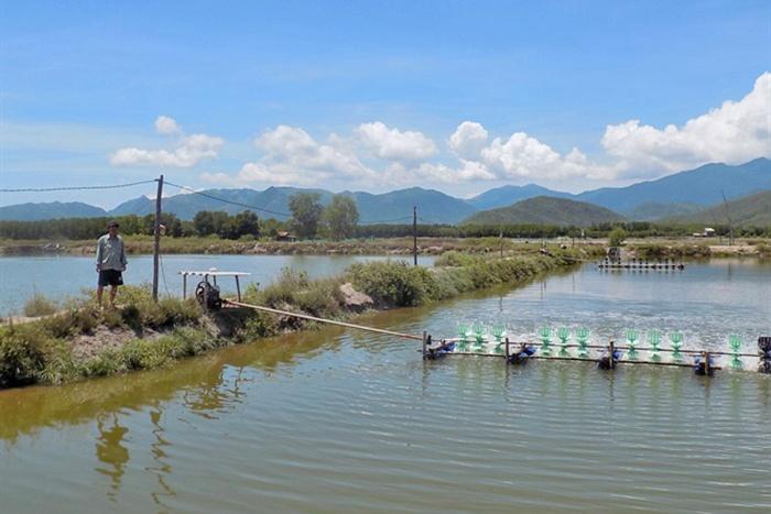 Kết quả quan trắc môi trường và giám sát vùng nuôi Khánh Hòa