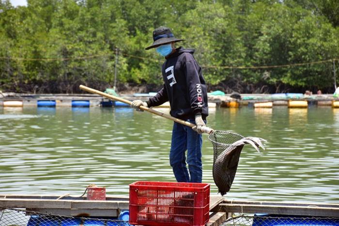 Kết quả khảo sát nguyên nhân cá chết ở Long Sơn - Vũng Tàu