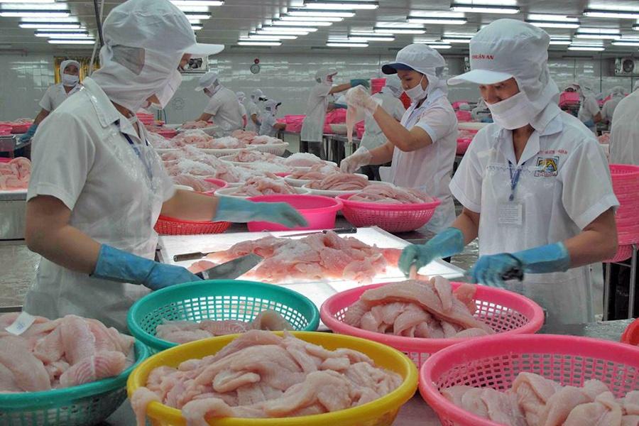 Ngành sản xuất cá tra chờ tín hiệu của thị trường