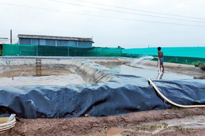 Xử lý nước thải nuôi tôm siêu thâm canh bằng biogas