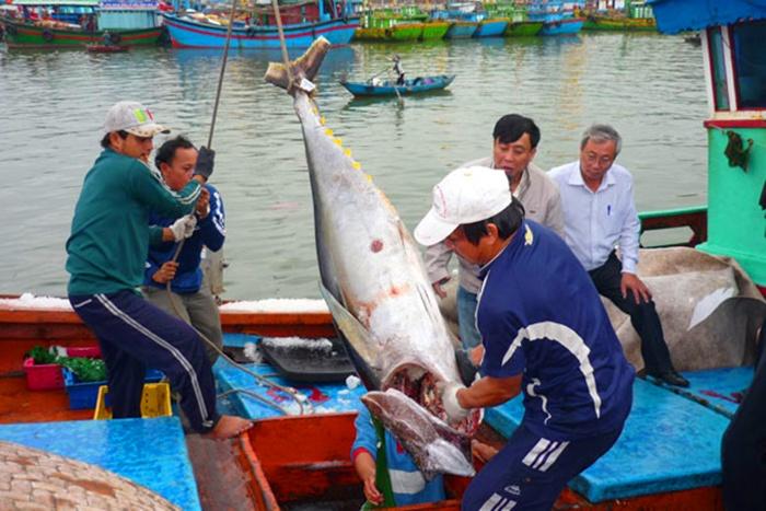 Thủy sản xuất khẩu sang Trung Quốc ùn ứ do lơ là quy định