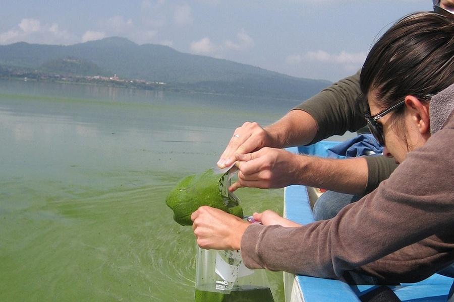 Xử lý các vấn đề liên quan đến tảo trong ao nuôi cá