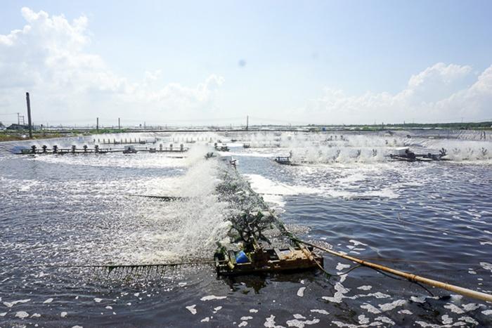 Liên minh tôm sạch - Bước khởi động cho thương hiệu tôm Việt