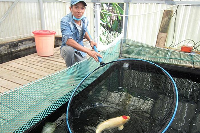 Chàng Trai Quảng Nam làm giàu nhờ trang trại nuôi cá koi