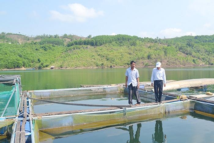 Cá nuôi ở lòng hồ thủy điện chết hàng loạt
