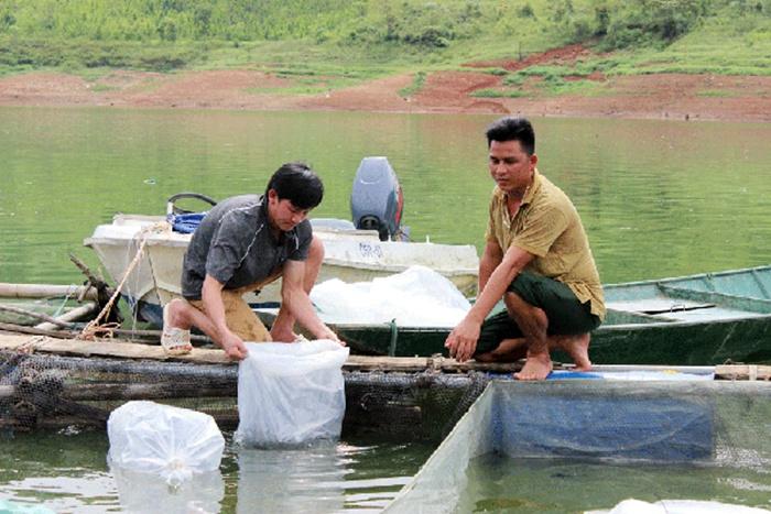 Triển khai mô hình nuôi cá tầm trong lồng bè