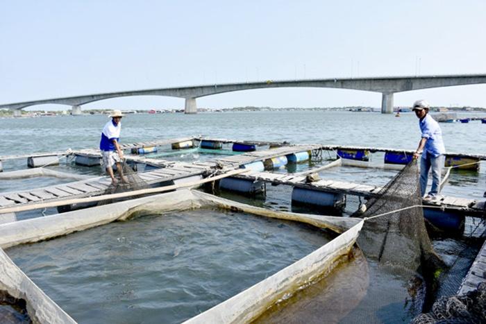 Bà Rịa - Vũng Tàu: Sắp xếp nuôi thủy sản lồng bè theo quy hoạch quá chậm