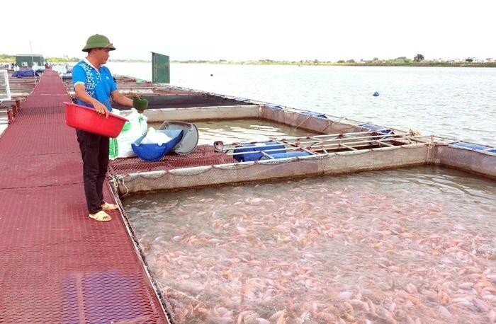 Ồ ạt nuôi cá lồng ở TP Hải Dương