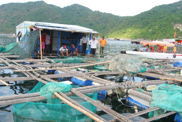 Nuôi thủy sản lồng bè Phú Yên: Chờ quy hoạch chi tiết