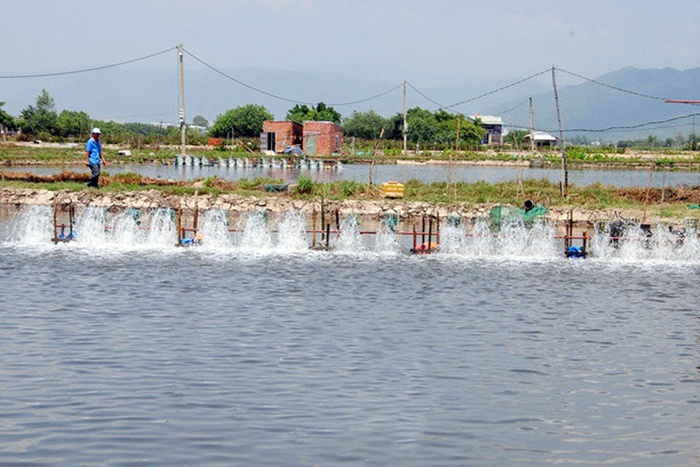 Chủ động bảo vệ thủy sản mùa nắng nóng