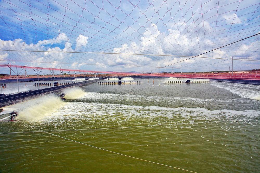 Minh Phú sẽ mở rộng diện tích nuôi tôm thêm 2.500 ha