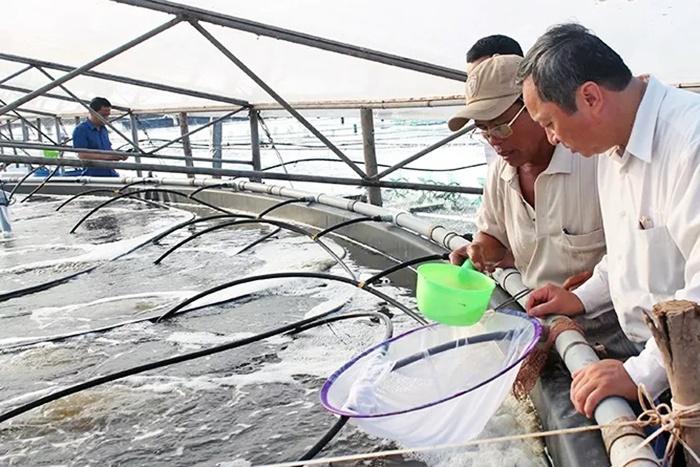 Xây dựng thương hiệu tôm Việt