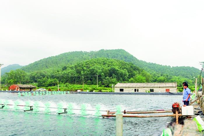Nuôi trồng thủy sản của Biên Hòa đạt 300 tỷ đồng/năm