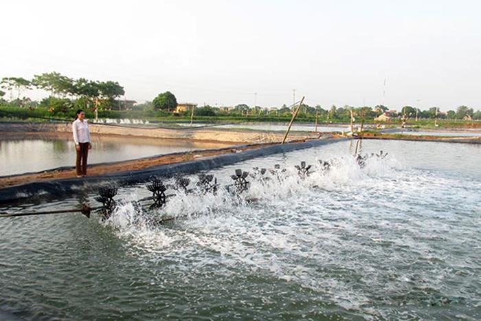 Nông Cống: Sản lượng nuôi trồng thủy sản đạt 1.329 tấn