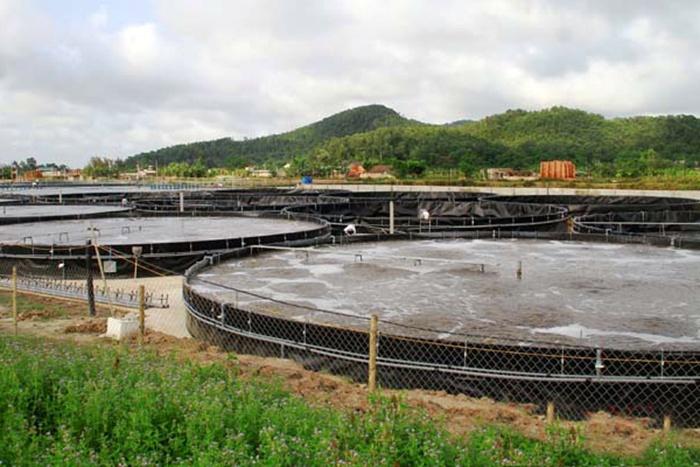 Hiệu quả mô hình nuôi tôm công nghiệp trong bể ở Thanh Hóa