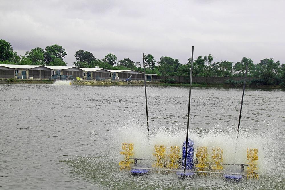 Hà Nội: Điều kiện khu nuôi trồng thủy sản ứng dụng công nghệ cao