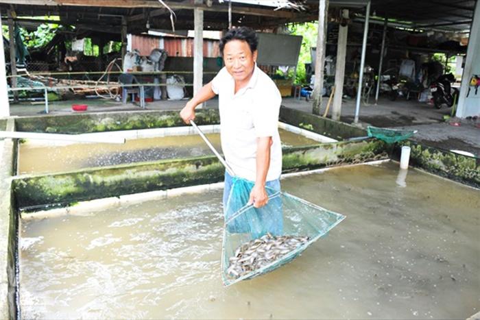 ĐBSCL: Lũ về, cá giống nước ngọt tăng giá mạnh