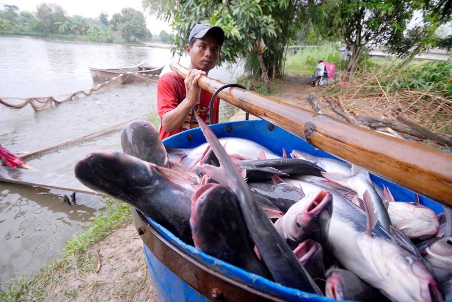 Tổ chức lễ hội cá tra Việt Nam 2019 tại Đồng Tháp