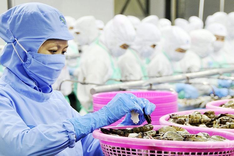 Xuất khẩu tôm Việt Nam bắt đầu đảo chiều đi lên