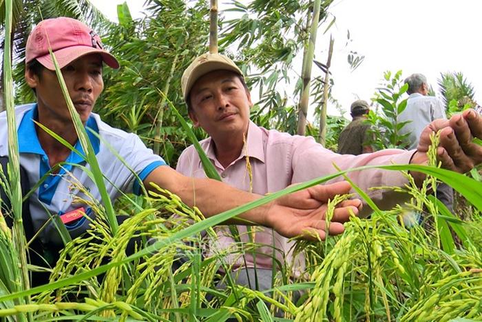 Điều kiện chuyển đổi đất trồng lúa có hiệu lực từ 1-9