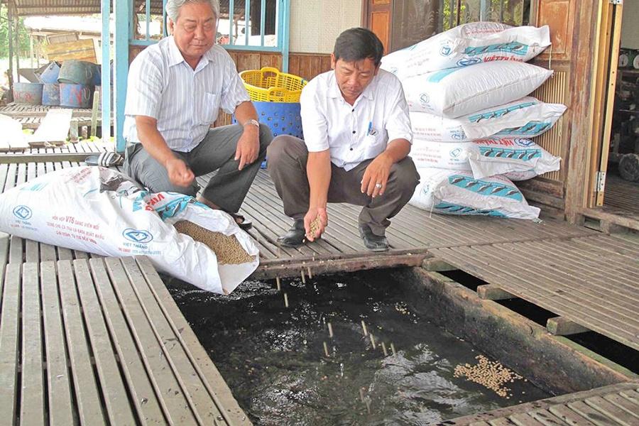 Bài học từ cá tra: Đa dạng hóa loài cá nuôi để giảm rủi ro thị trường