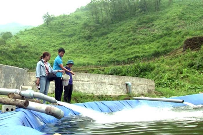 Lào Cai: Cá chết hàng loạt ở Trì Quang do nắng nóng