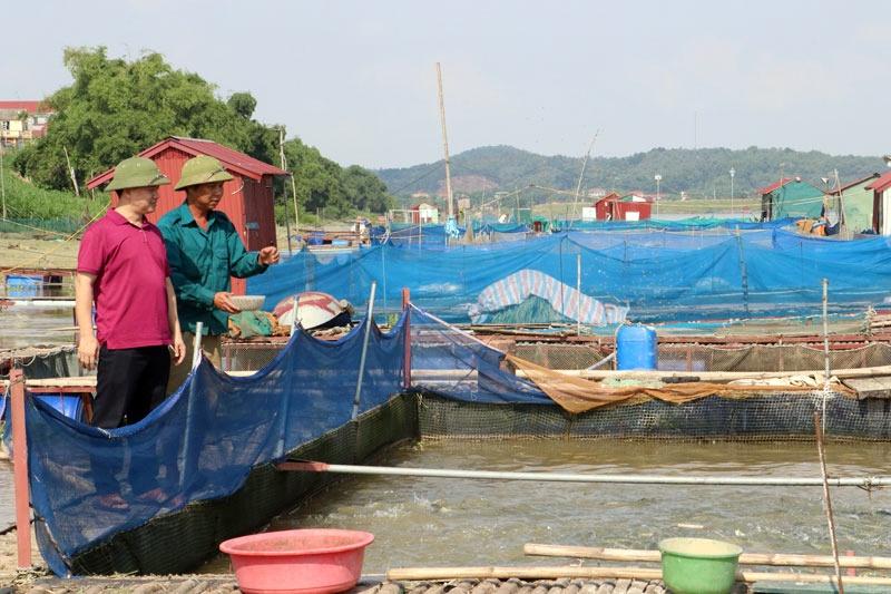 Hướng đi bền vững cho nghề nuôi cá lồng