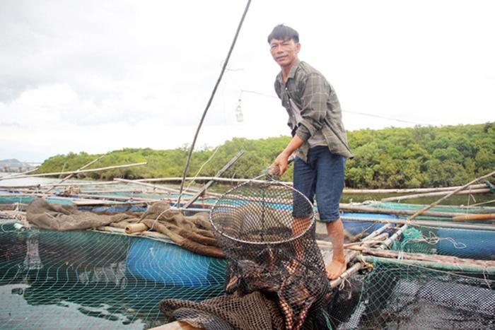 Thạch Sơn - Hà Tĩnh: Thu 11,9 tỷ đồng từ cá lồng bè