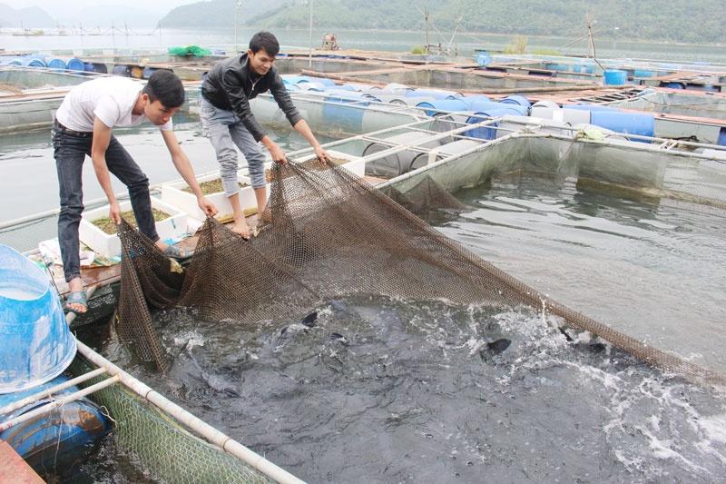 Những nhân tố ảnh hưởng đến năng suất nuôi cá lồng