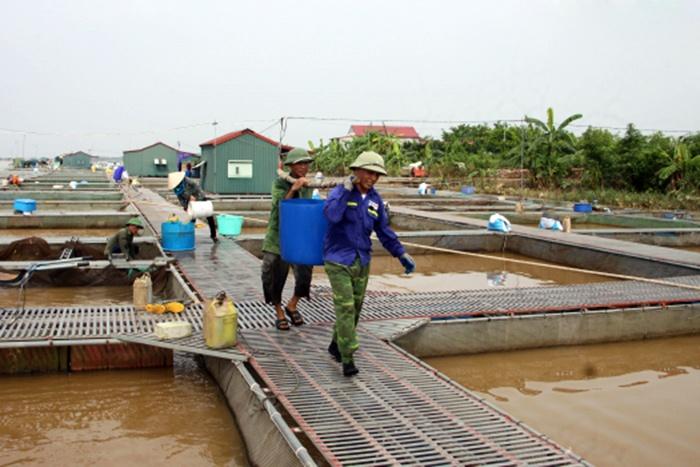 Bảo vệ an toàn cá lồng trong mùa mưa bão