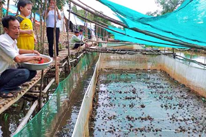 Thu nhập hơn 50 triệu đồng/tháng nhờ mô hình trên ếch dưới cá